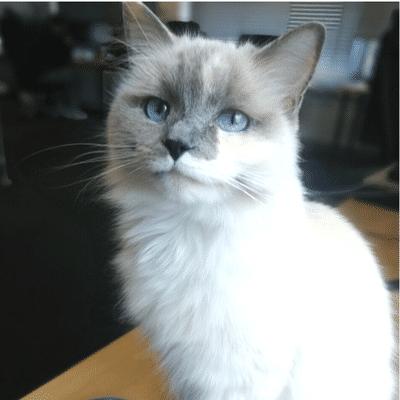Nova the Cat